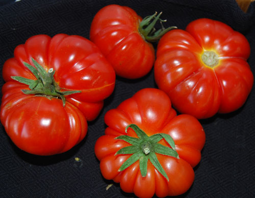 tomato-costuluto-genevese-78-day