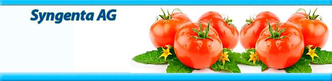 650h160-singenta-tomat