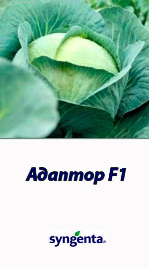 Adaptor-F1-kapusta-belokochannaya1