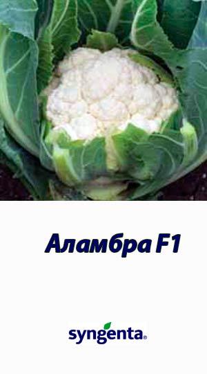 Alambra-F1-kapusta-tsvetnaya