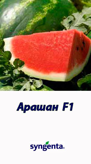 Arashan-F1-gibrid-arbuza-Syngenta