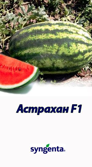 Astrahan-F1-gibrid-arbuza-Syngenta