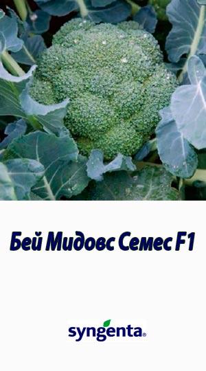Bey-Midovs-Semes-F1