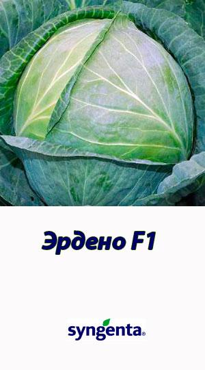 Erdeno-F1