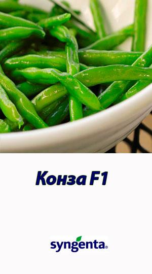 Fasol-sparzhevaya-Konza-Syngenta