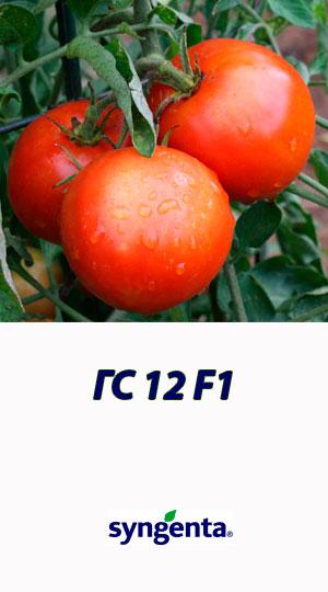 GS-12-F1-gibrid-tomata-Syngenta