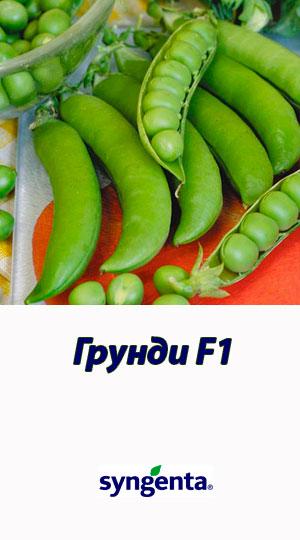 Grundi-goroh-ovoshhnoy-Syngenta