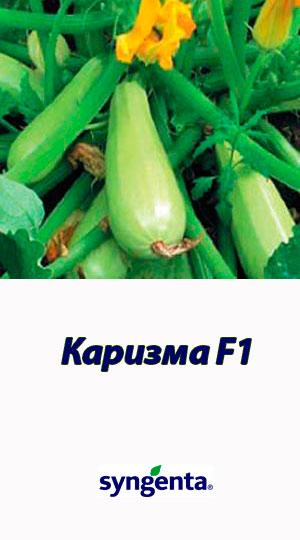 Karizma-F1-gibrid-kabachka-Syngenta