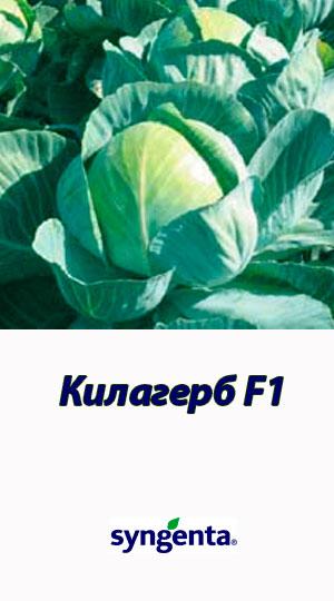 Kilagerb-F1
