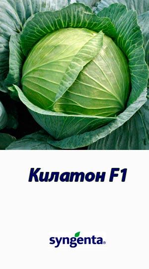 Kilaton-F1-300h540
