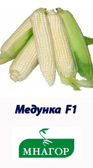 kukuruza-medunka-f1-mnagor