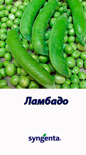 Lambado-goroh-ovoshhnoy-Syngenta