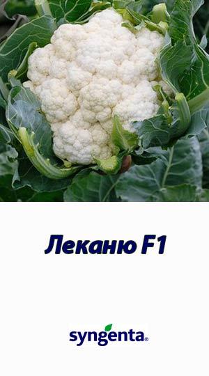 Lekanyu-F1-kapusta-tsvetnaya