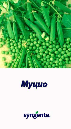 Mutsio-goroh-ovoshhnoy-Syngenta