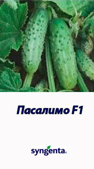 Pasalimo-F1-gibrid-ogurtsa-Syngenta