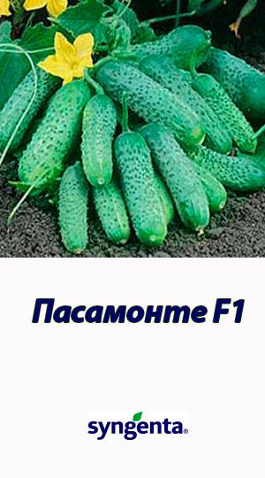 Pasamonte-F1-gibrid-ogurtsa-Syngenta