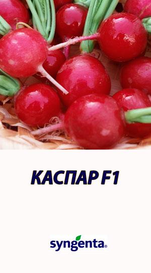 Redis-KASPAR-F1-Syngenta-10000-shtuk