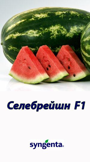Selebreyshn-F1-gibrid-arbuza-Syngenta