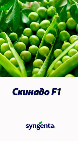 Skinado-goroh-ovoshhnoy-Syngenta