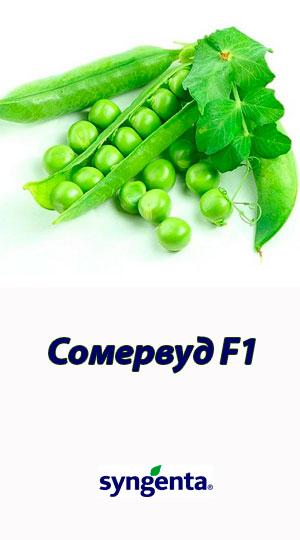 Somervud-goroh-ovoshhnoy-Syngenta