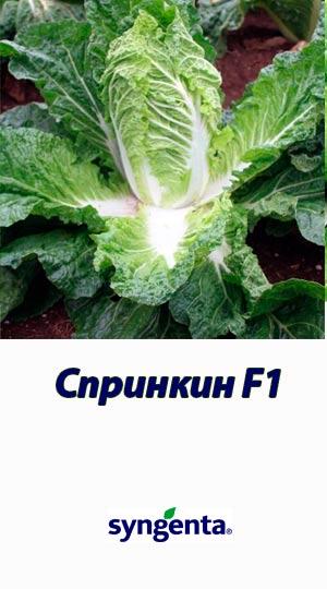 Sprinkin-F1-kapusta-pekinskaya