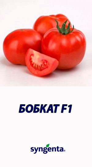 Tomat-BOBKAT-F1-Syngenta-2500-shtuk