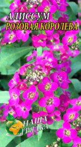 Аліссум Рожева королева 0,1 грам