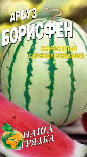 arbuz-borisfen-semena