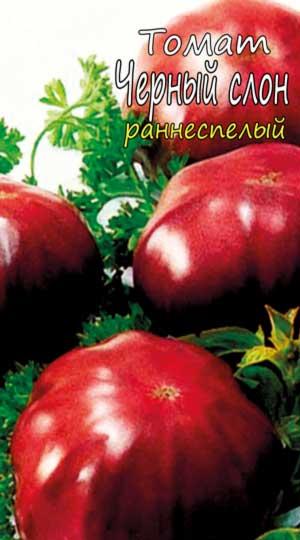 chernyiy-slon-tomat