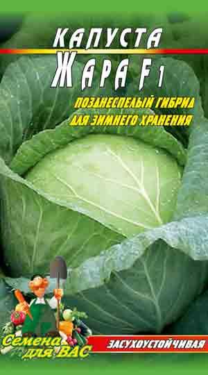 kapusta-zhara-