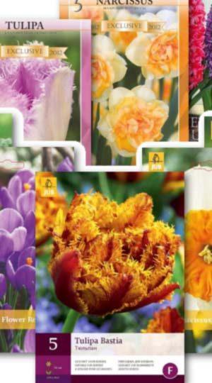 Тюльпаны от 25 шт каталог луковичных Осень