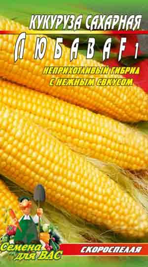 kukuruza-lyubava