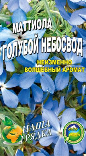 маттиола-двурогая-голубой-небосвод