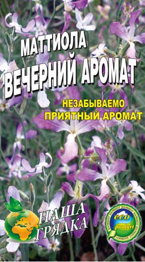 маттиола-двурогая-вечерний-аромат
