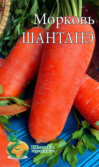 морковь шантанэ