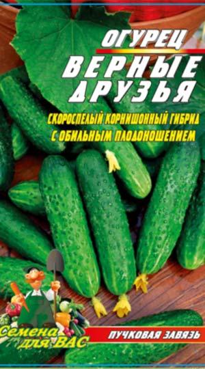 ogurecz-vernye-druzya