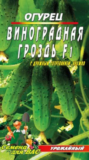 ogurecz-vinogradnaya-grozd