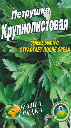 petrushka-krupnolistovaya