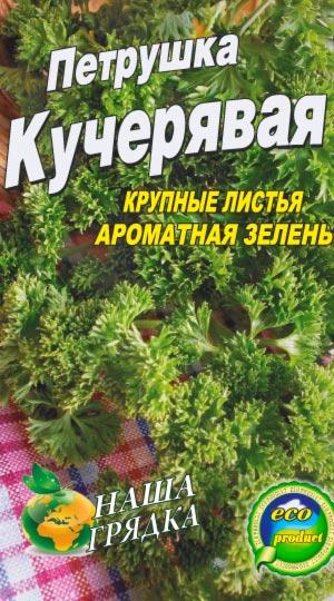 petrushka-kudryavaya
