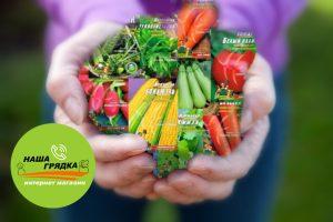 Семена-оптом-в-больших-пакетах